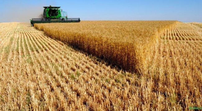 Dünyanın tahıl ambarı Türkiye olacak