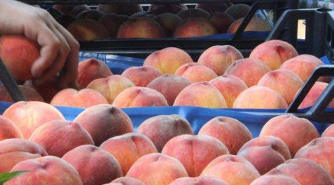 Rusya'ya meyve sebze ihracatında şeftali ilk sırada