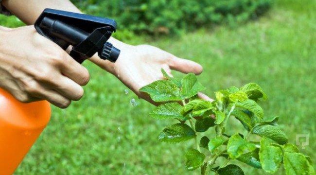 Bitki koruma ürünleri ithalatına düzenleme