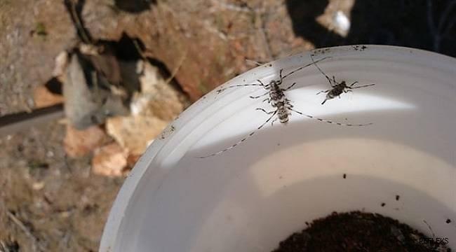 4 milyon zararlı böcek imha edildi