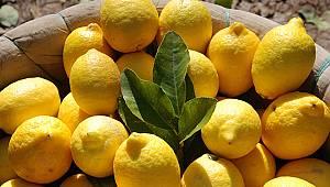 Limon dalında kaldı