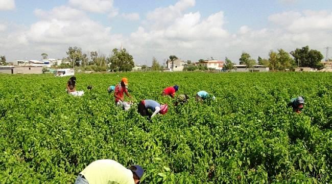 Mevsimlik tarım işçilerine eğitim