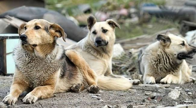 Adana'da sokak hayvanları ıslah edilecek