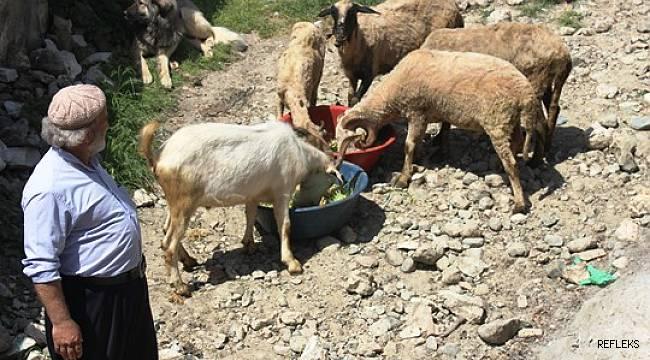 Hayvanları için topraksız yem üretti