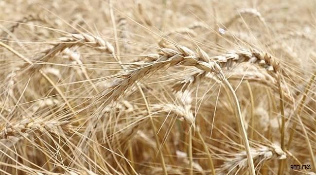 """Sağlam """"Stratejik ürün, buğdaydan vazgeçilmemeli"""""""