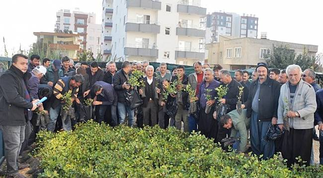 Erdemli'de çiftçilere ücretsiz harnup fidanı dağıtıldı