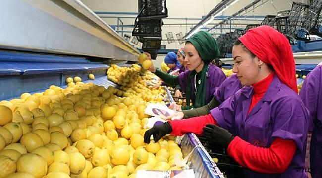 Türk narenciyesi ilk kez Uruguay pazarına giriyor