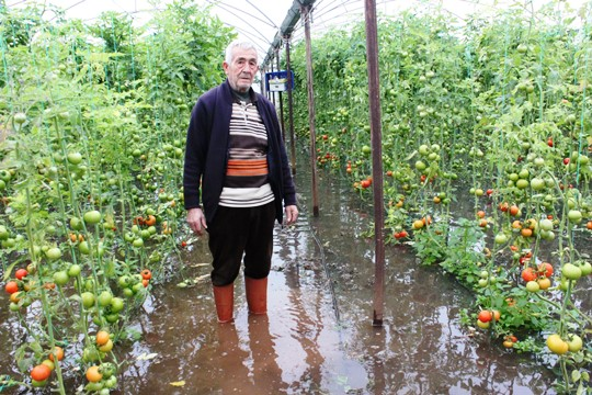 Sel Mersin'de tarım arazilerini vurdu