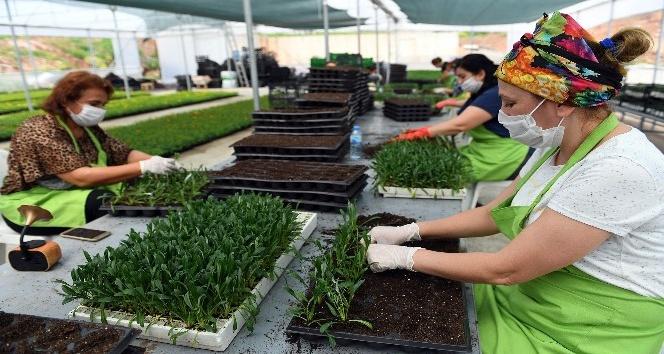 Kadın kooperatifi üyelerinin yetiştirdiği 500 bin çiçek toprakla buluşuyor