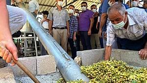 Mut'ta Antep Fıstığı hasadına başlandı