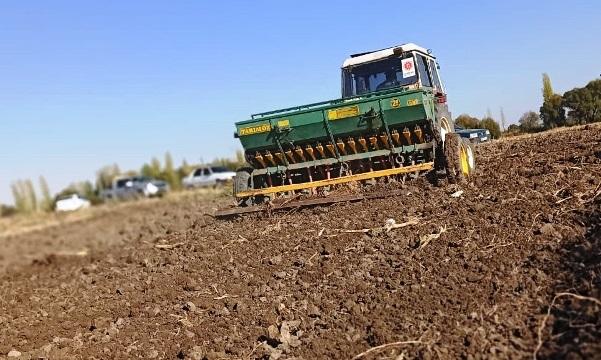 Elbistan Belediyesi, ata mirası siyez buğdayı üretecek