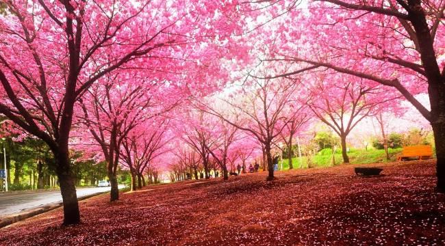 Bahar mutluluğunun resmini yapabilir misin, Abidin?