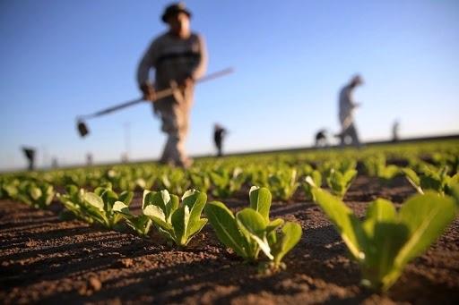 Tarım sektörü 10 çeyrektir büyüyor