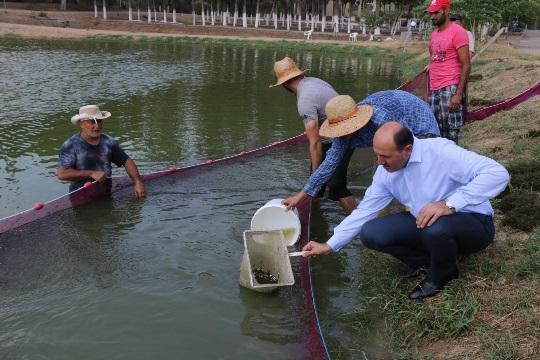 Göl ve göletlere yavru balık takviyesi Adana'dan